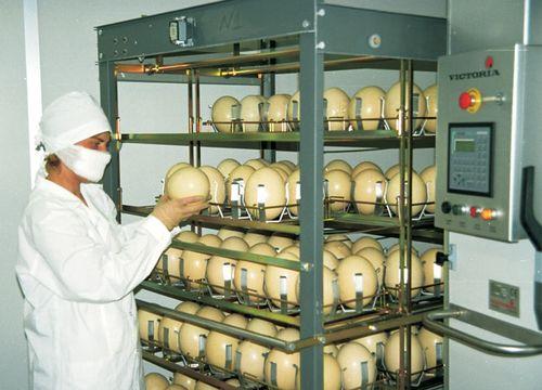 inkubator dlya strausa
