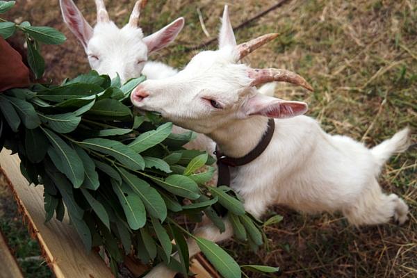 esli nachalsya ponos u kozy chto delat metody lecheniya i diagnostiki