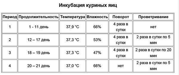 optimalnaya temperatura v inkubatore dlya kurinyh yaic rezhimy inkubacii i vozmozhnye oshibki